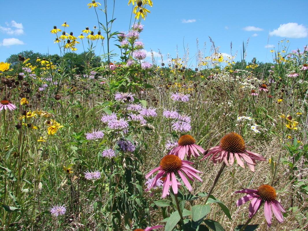 Where To Native Plants Hamilton County Soil And Water